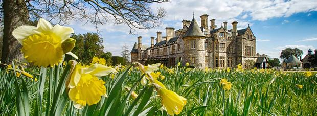 Beaulieu Palace House with Daffodils