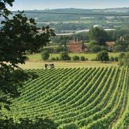 Malbec wine region