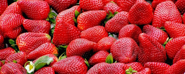 Delicious strawberries from Goodall's Farm in Lymington where you can pick your own