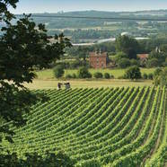 Celebrate English Wine week at Cambium in the New Forest